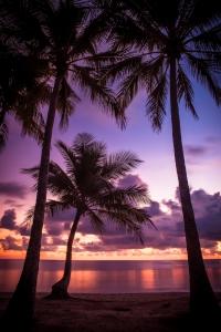 Palmrise